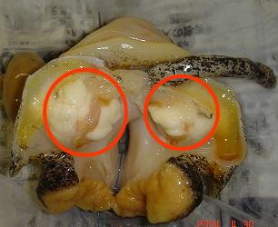 バイ貝処理手順の写真2