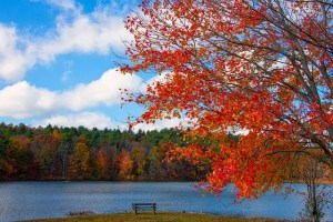 Moving from NH to MA, enjoy the fall with red trees, water and nature