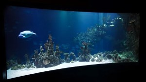 Aquarium ready for packing