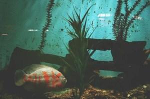 Fish swimming in aquarium prepared for packing