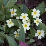 Botanischer_Garten_06