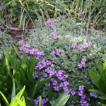 Botanischer_Garten_10