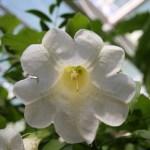 Botanischer_Garten_69