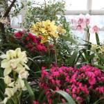 Botanischer_Garten_74