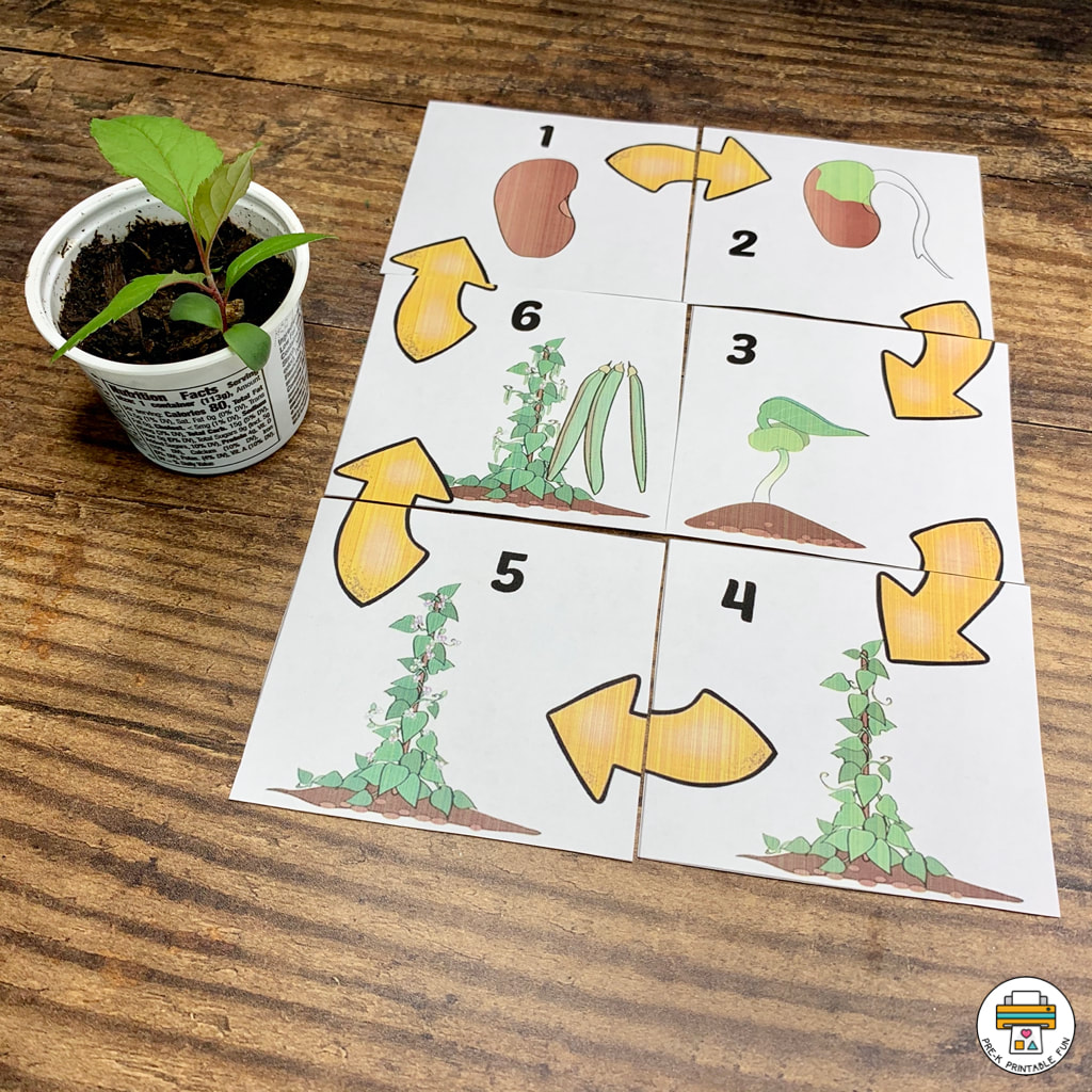 Growing Fruits And Vegetables Activity Pack