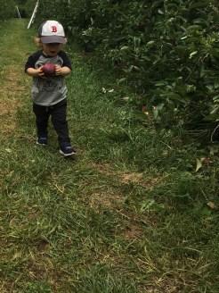 PCA apple picking day 05