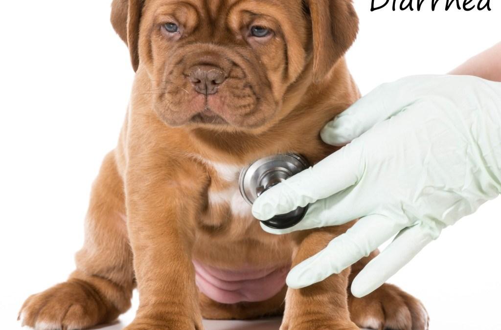 MY DOGUE DE BORDEAUX PUPPY HAS DIARRHEA