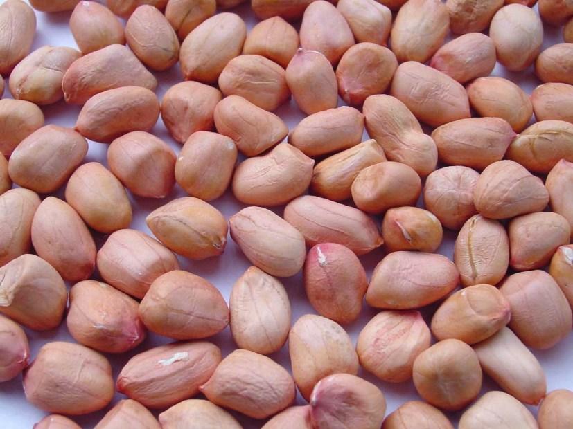 Image result for groundnut