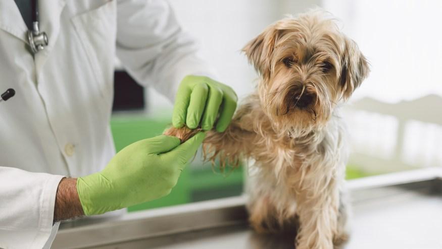 Las 10 preguntas más comunes sobre el cuidado de las mascotas ...