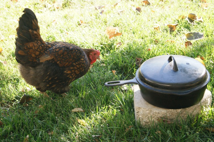 Caring for Cast Iron Pans need not be intimidating or hard. Check it out in 4 easy steps.