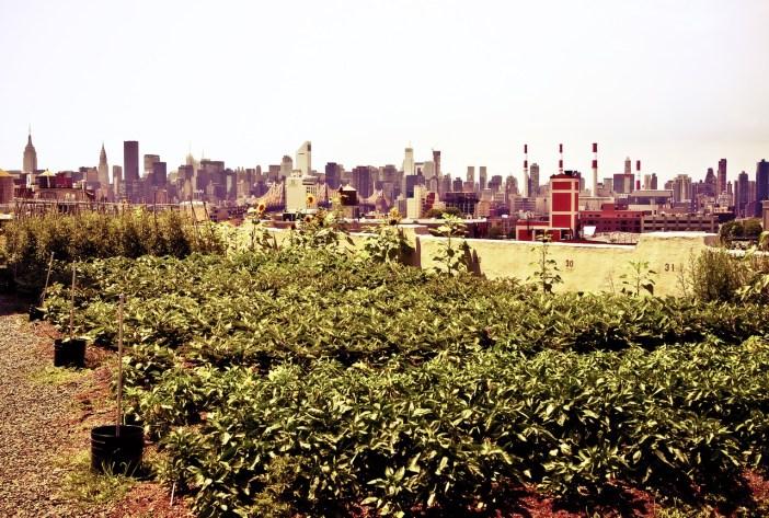 urban rooftop gardens