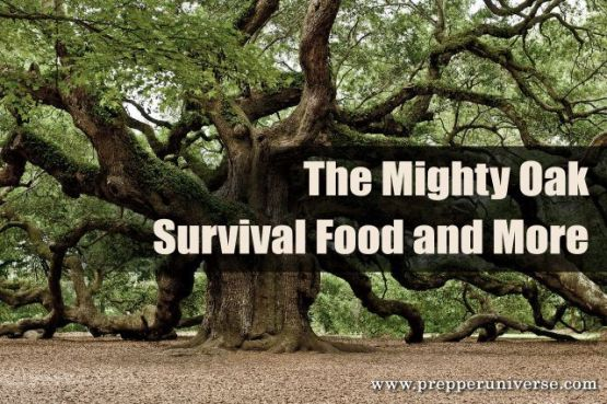 The Mighty Oak: Survival Food and More