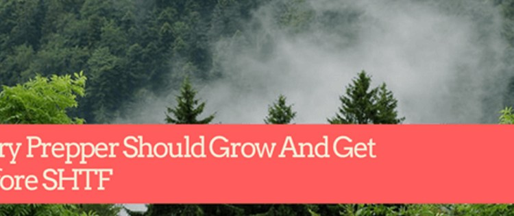 14 Trees Every Prepper Should Grow And Get Ready Before SHTF