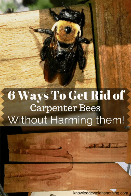 How To Get Rid Of Carpenter Bees (6 'Bee Friendly' Methods)
