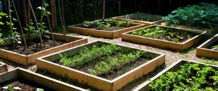 Emergency Food Planning – Risk Management