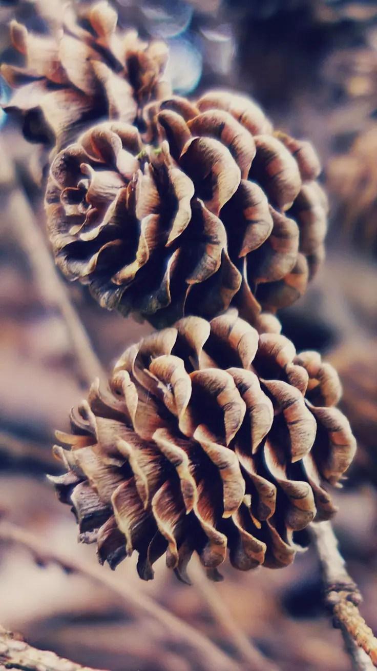 fond d'écran nature hiver