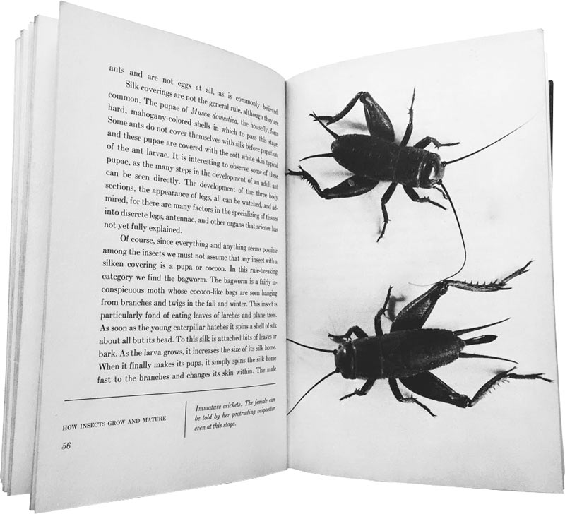 Image result for images of insects eating newspaper