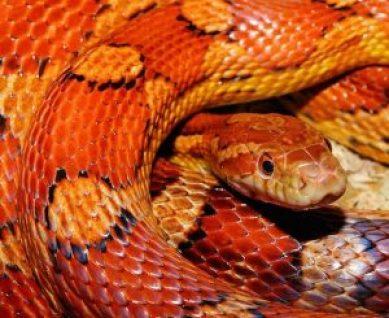 snake-579682_640