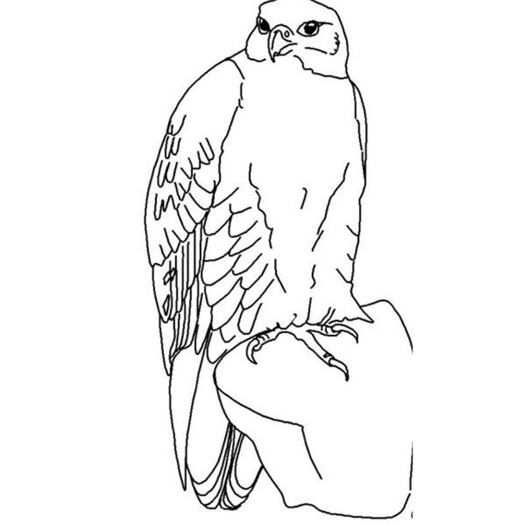 Hawk Amp Falcon Coloring Pages For Kids