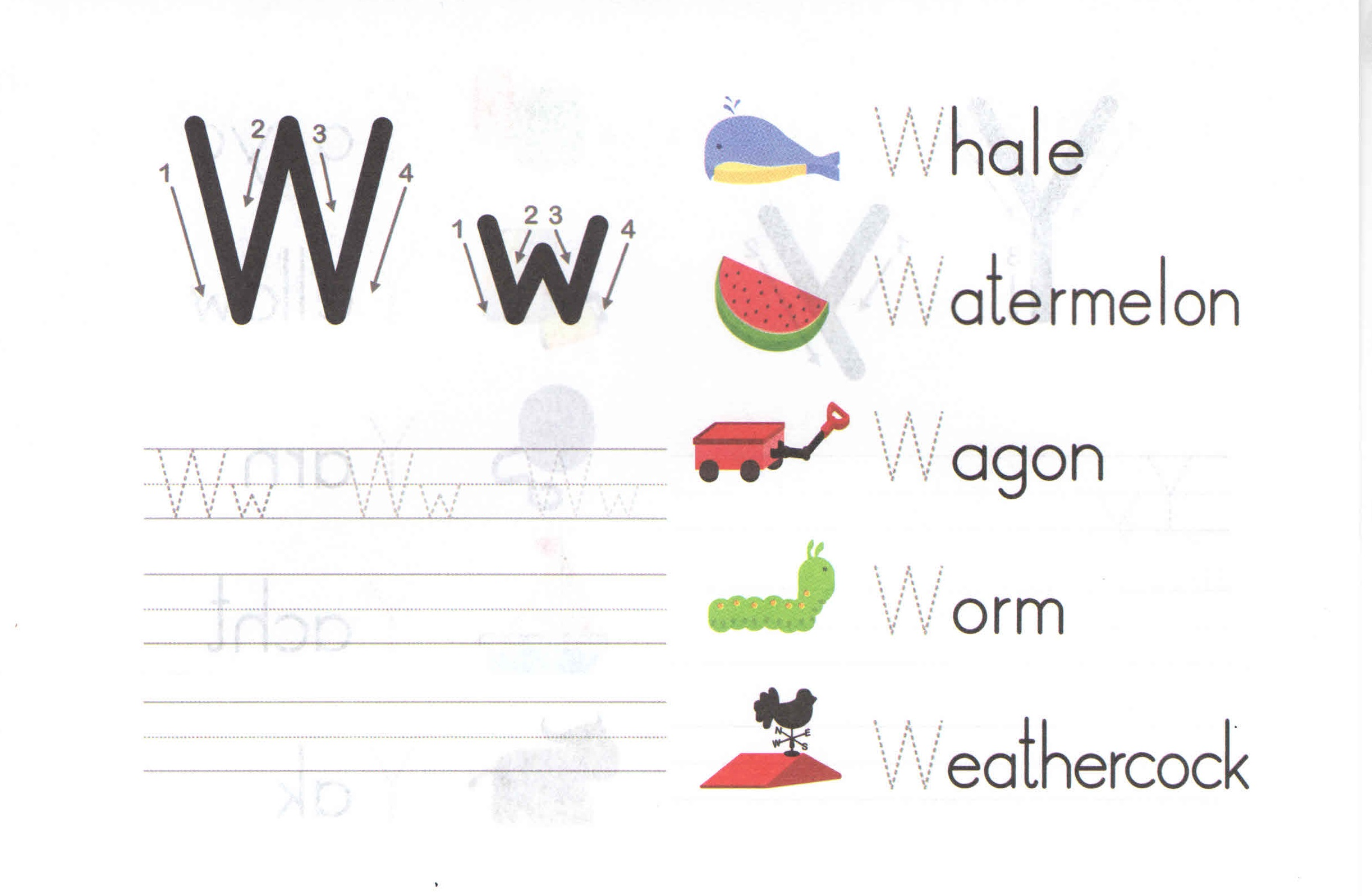 Alphabet Capital And Small Letter W W Worksheet For Kids