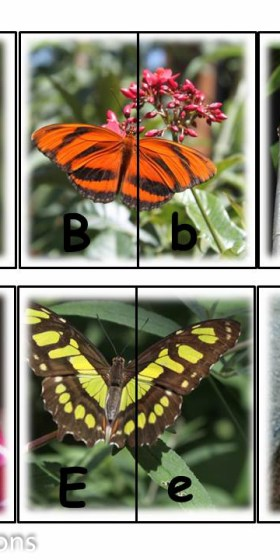 Butterfly Alphabet Matching Cards