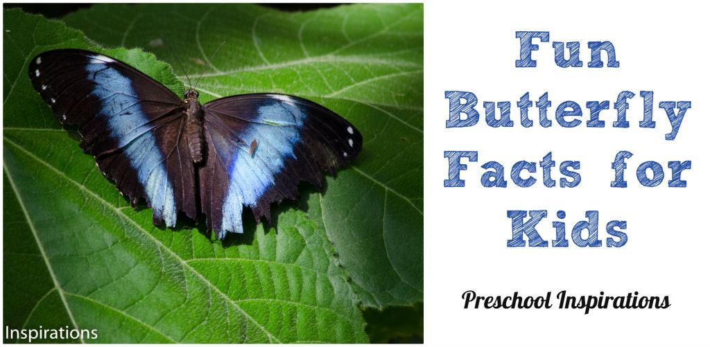 Preschool Inspirations - Fun Butterfly Facts for Kids