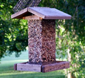 simple home made birdfeeder as a science activity for kids.