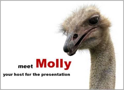 Cute Visual Presentation
