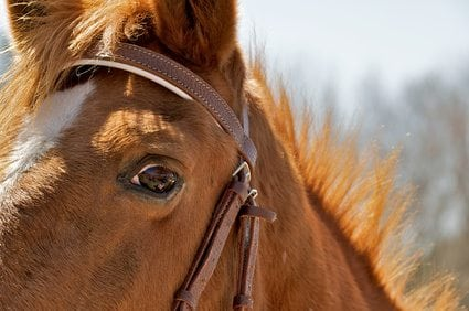 """Why It's Important to Have """"Horse Sense"""" When You're Presenting"""