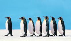 BIO International convention don't dress like a penguin