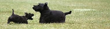 Ms. Beazley e Barney, atuais primeiros-cães.