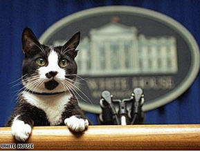 Clintons' Cat Socks Dies at Age 20