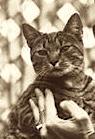 Calvin Coolidge's cat Tiger