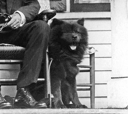 Calvin Coolidge's Dog, Tiny Tim