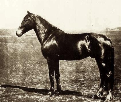 Thruxton, Andrew Jackson's Racehorse