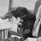 FDR's Other Scottish Terrier, Meggie