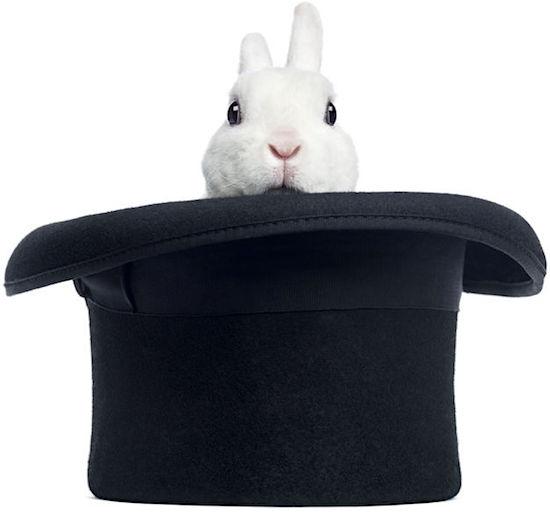 JFK's Rabbit, Zsa Zsa