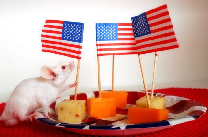 Presidential Pet Trivia – Week of March 23, 2020