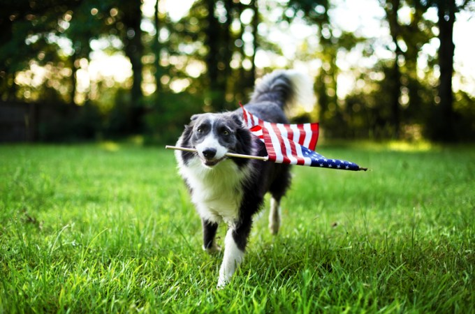 Presidential Pet Trivia – Week of July 15, 2019