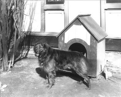 Benjamin Harrison's Dogs