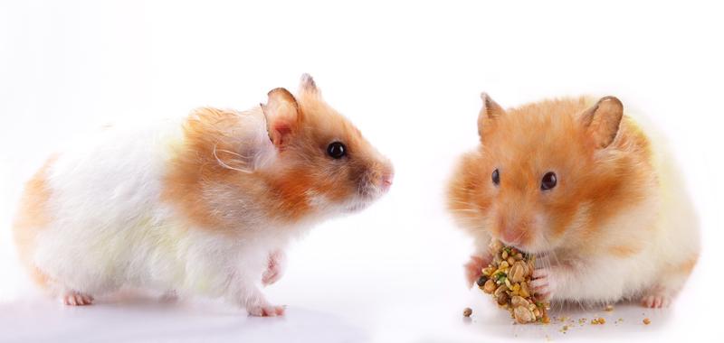 Lyndon B. Johnson's Hamsters