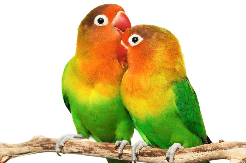 Lyndon B. Johnson's Lovebirds