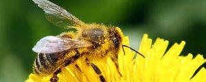 more bees e1555442554599