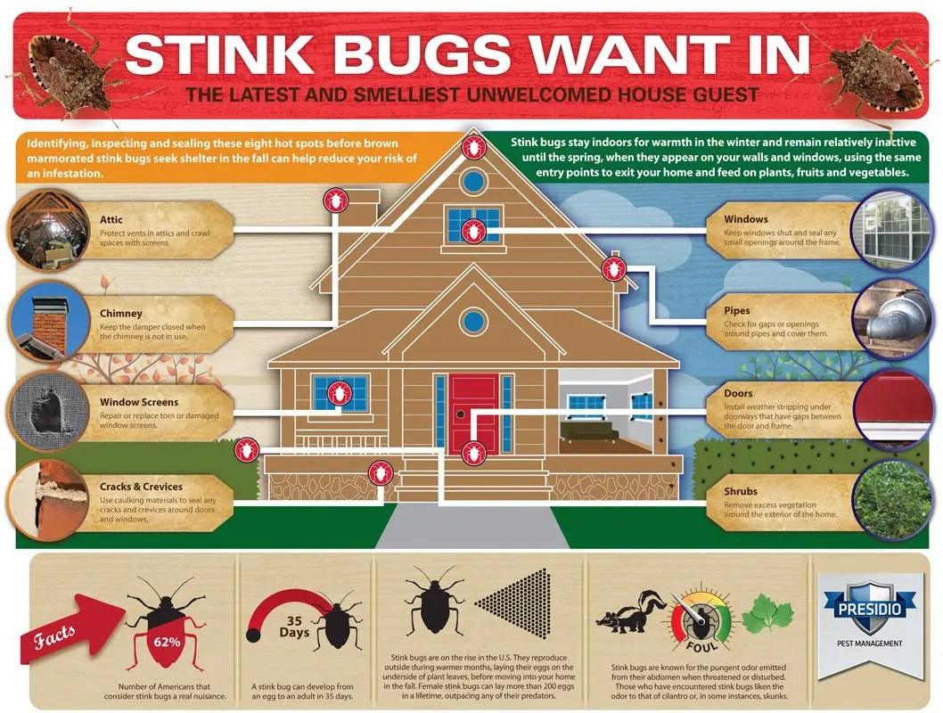 stink bugs want in