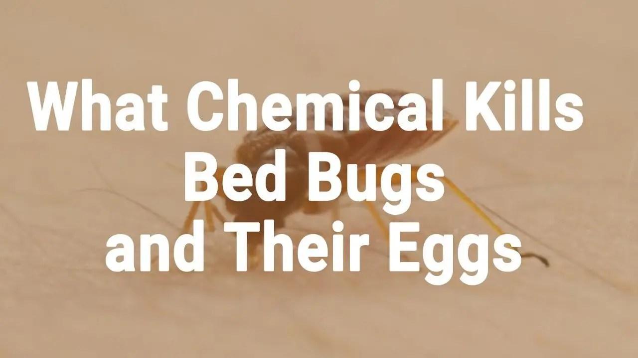 chemicals to kill Bedbugs Presidio Pest Management