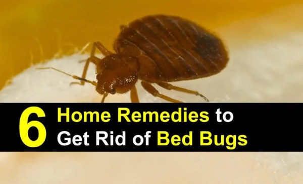 six home remedies