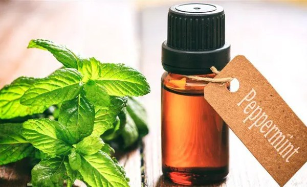 """by Bobby Wilford Got Bed Bugs? Don't DIY! Essential Oils are amazing! We admit it! They solve such a large number of problems that other products (AND MEDICINES!) can't begin to resolve as effectively, and they do it with fewer side effects and a better smell than chemical alternatives. If you are """"oily"""", or have been told by a friend or relative that essential oils might help you solve a bed bug problem, you probably want to make sure oils will be effective before using them as a treatment, in particular because they can be costly – at least for the high quality ones (i.e. Certified Therapeutic Grade.) The one oil you were likely referred to is Peppermint Oil. This essential oil is excellent at deterring spiders and other outdoor insects away from indoor areas, and peppermint plants are often used as a natural deterrent of certain pests in a garden. You may have also been told about lavender, eucalyptus, thyme, tea tree, and others. For bed bugs, none of the above oils will be a suitable treatment if you already have a bed bug problem. Although some natural health resources on the web insist essential oils """"repel"""" and """"prevent"""" bed bugs from infesting, professionals in the field and insect authorities do not see the results that support essential oils as a good solution. Moreover, some studies show that when many common """"pest repellant"""" essential oils are applied to bed bugs, they don't even die. As you'll see elsewhere in our blog, we strongly recommend heat treatment for killing bed bugs. This isn't because we're trying to push a hidden agenda; we use it because IT WORKS, and it works better than any other bed bug solution available. If a more effective solution comes on the market, you'd better believe we're going to switch to it, especially because we guarantee our service and repeat treatments to customers with guarantees costs US money! If you love essential oils, keep using an d enjoying them for their many health and home related benefits. If you have bed b"""
