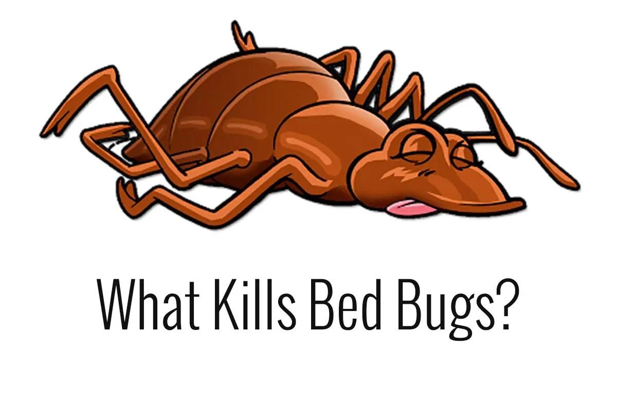 bleach kills bedbugs Bedbugs Presidio Pest Management