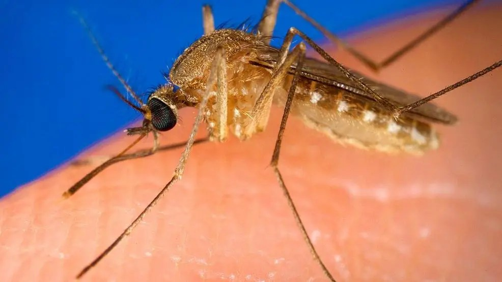 mosquito misconceptions