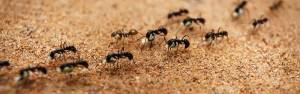 Presidio Pest Management ants
